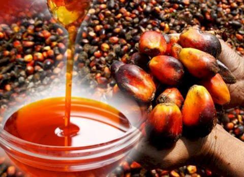 Malaysia: Xuất khẩu dầu cọ 25 ngày đầu tháng 2 ước tính đạt 922,000 tấn