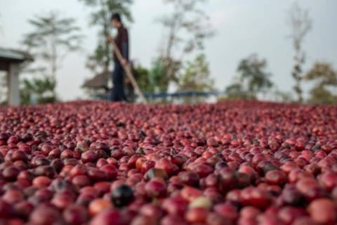 [phân tích] sự luân chuyển dòng vốn giữa các kênh tài chính đang ảnh hưởng đến giá cà phê