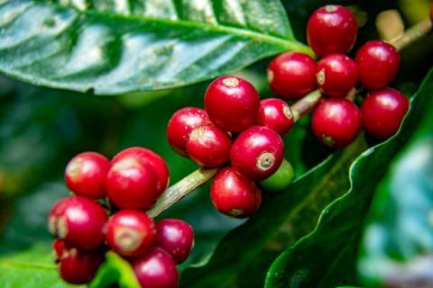 [tổng hợp 09/03] giá cà phê và…
