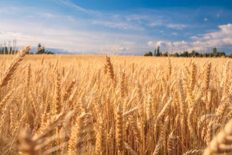 [phân tích] giá nông sản diễn biến phức tạp khi khách hàng vắng bóng trên thị trường