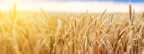 Ukraine: apk-inform dự báo sản lượng và xuất khẩu ngũ cốc 2021/22 tăng mạnh