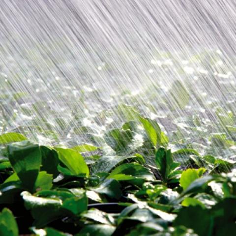 [thời tiết] chất lượng lúa mỳ tại các khu vực gieo trồng chính ổn định nhờ sự xuất hiện của…