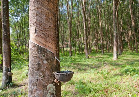 Malaysia: Xuất khẩu cao su tự nhiên trong tháng 2/2021 tăng 13.5% lên mức 54,632 tấn