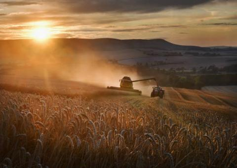 Canada: Tốc độ xuất khẩu ngũ cốc tiếp tục cho thấy sự khởi sắc trong tuần trước