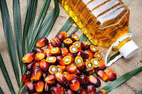 Malaysia: tồn kho dầu cọ cuối…