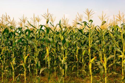 [tổng hợp 11/05] nông sản và năng lượng đồng loạt tăng. kim loại và công nghiệp trái chiều