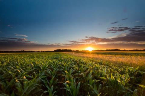USDA Crop Progress: Tiến độ mùa vụ và chất lượng cây trồng trong tuần kết thúc ngày 09/05