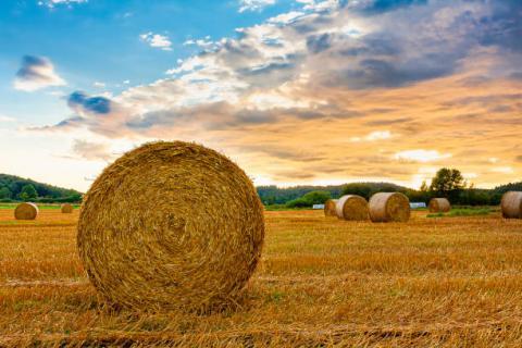 Nga: xuất khẩu lúa mỳ niên vụ…