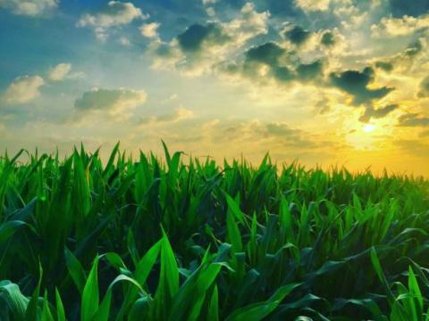 [Tổng hợp] Các mặt hàng nông sản tăng mạnh trở lại trong phiên cuối tuần
