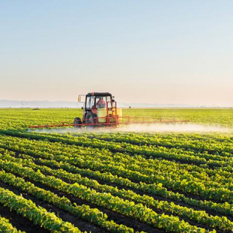 USDA Crop Progress: Tiến độ mùa vụ ngô và đậu tương chi tiết từng bang ngày 20/06