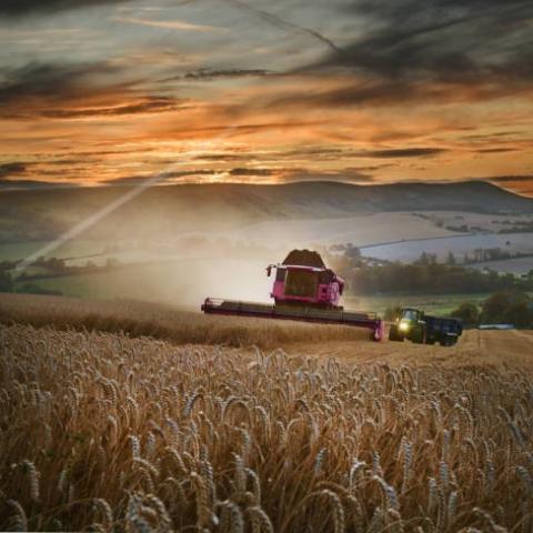 EU: MARS  tăng dự báo năng suất ngô và năng suất lúa mỳ dự kiến