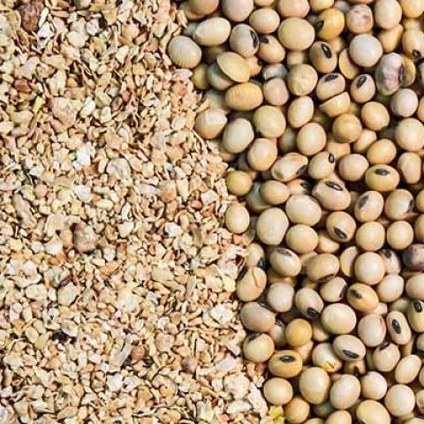 ấn độ: xuất khẩu khô dầu thực vật tăng trong tháng 4 và tháng 5 do nhu cầu leo thang