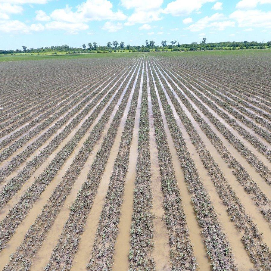 Argentina: mưa giúp cải thiện tiến độ gieo trồng dù nhiều vùng vẫn còn chịu khô hạn
