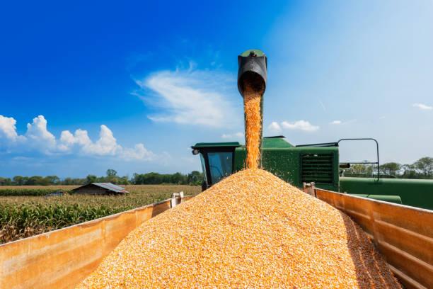 Usda: ép dầu đậu tương tháng 10…