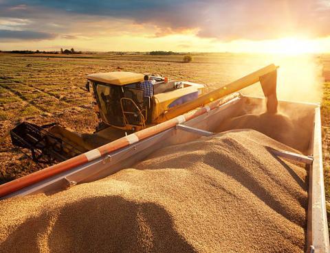Báo cáo Export Sales của USDA: Bán hàng ngô và đậu tương đều giảm