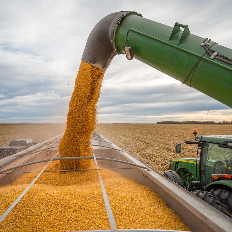 Nga: Chính phủ đang nghiên cứu công cụ mới giúp kiểm soát xuất khẩu ngũ cốc
