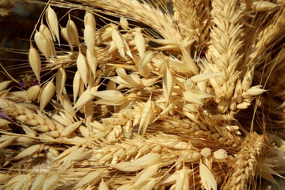 USDA Export Inspections: Giao hàng đậu tương tăng, ngô và lúa mỳ giảm