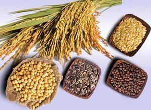 USDA Export Sales: Bán hàng ngô, đậu tương và lúa mỳ đều tăng