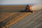 Dầu đậu tương đang có xu hướng giảm theo giá dầu thô