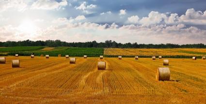 Các mặt hàng nông sản diễn biến…